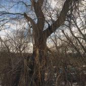 Train View (Tree 3), 2014-6, archival pigment print, 25